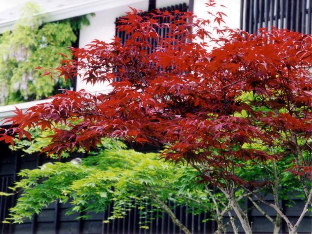 秋・紅葉の写真のページへ